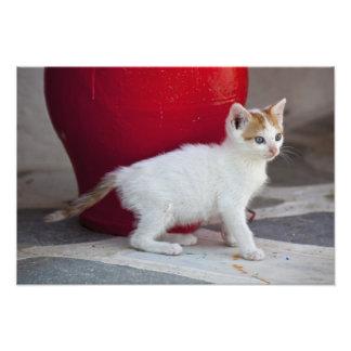 Gato, Mykonos, Grecia Impresiones Fotograficas