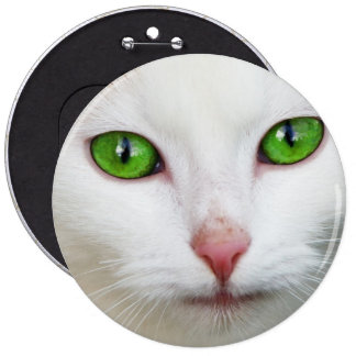 Gato nacional con la piel felina del blanco de la pin