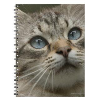Gato nacional cuadernos