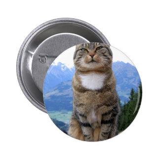 gato nacional del mascota del gato cat-369205 esti