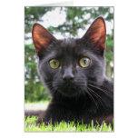 Gato negro afortunado felicitaciones