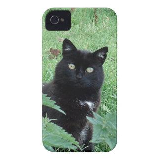 Gato negro afortunado lindo en el caso del iPhone iPhone 4 Coberturas