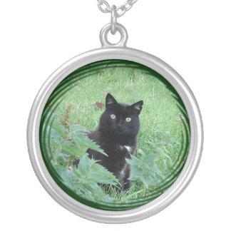 Gato negro afortunado lindo en el collar de la pla