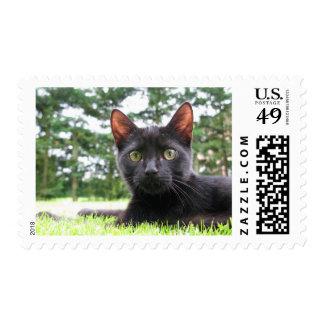 Gato negro afortunado franqueo