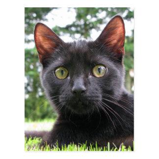 Gato negro afortunado tarjeta postal