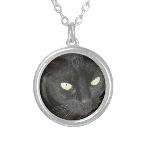 Gato negro aislado en fondo negro pendiente
