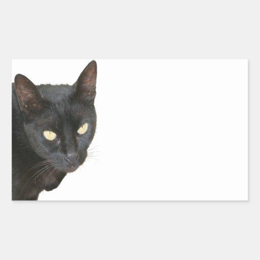 Gato negro aislado etiqueta