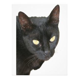 Gato negro aislado plantillas de membrete