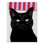 Gato negro/azul blanco rojo posters