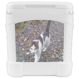 Gato negro blanco que camina hielera con ruedas