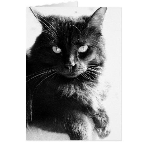 Gato negro bonito de la foto negra y blanca, notas tarjeta de felicitación