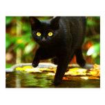 Gato negro con los ojos amarillos llamativos postal
