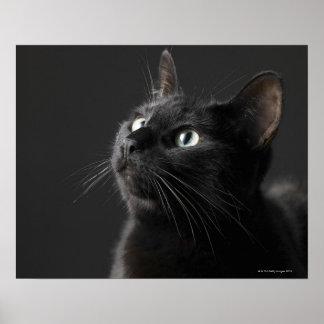 Gato negro contra el fondo negro, primer impresiones