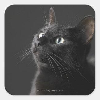 Gato negro contra el fondo negro, primer pegatina cuadrada