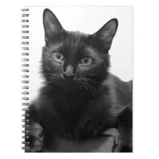Gato negro cuadernos