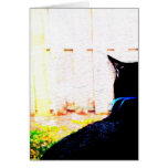 Gato negro de la parte posterior que mira hacia fu tarjeta