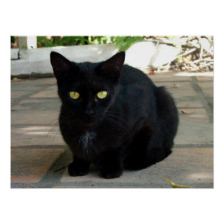 Gato negro de ojos verdes Ningún saludo Posters