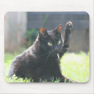 Gato negro del gatito mouse pad