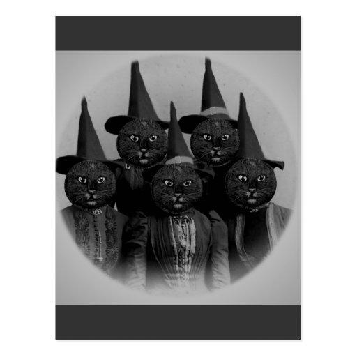Gato negro del vintage/brujas tarjeta postal