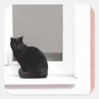 Gato negro en coral calcomanía cuadradase