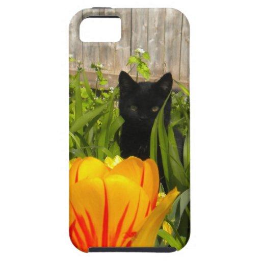 Gato negro en el caso del iPhone 5 de los iPhone 5 Fundas