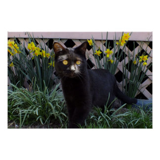 Gato negro en el poster de los narcisos