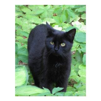 Gato negro en las plantas de verde lima