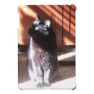 Gato negro en pensamiento