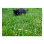Gato negro en tarjeta de cumpleaños de la hierba