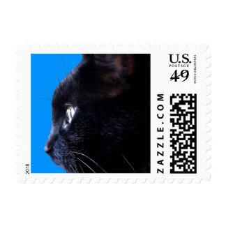 Gato negro en tiled.jpg azul franqueo