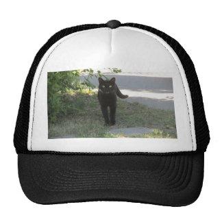 Gato negro en un jardín gorra