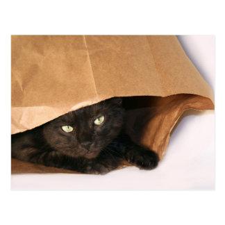 Gato negro en una postal del bolso