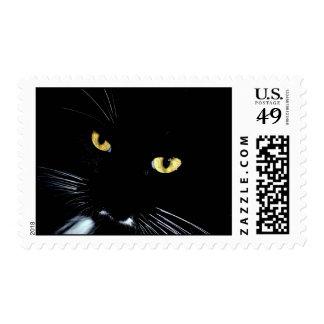 Gato negro envio