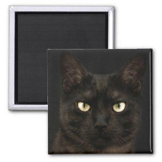 Gato negro fantasmagórico imán cuadrado