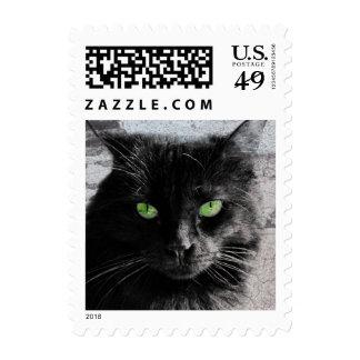 Gato negro Geen-Observado el franqueo del amante