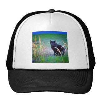 Gato negro gorra