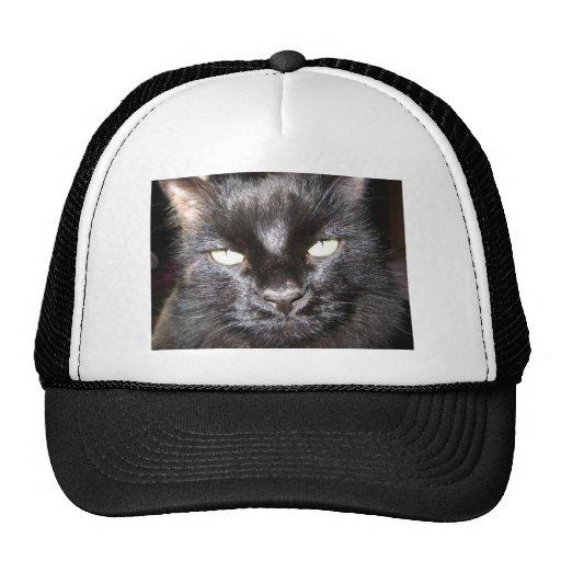 gato, negro gorros