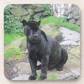 Gato negro grande de Jaguar en sentarse en roca Posavasos