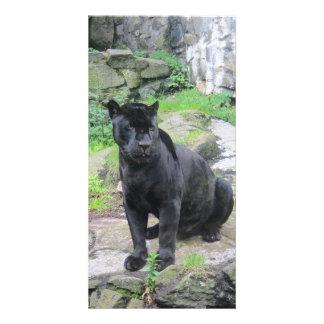 Gato negro grande de Jaguar en sentarse en roca Tarjeta Fotográfica Personalizada