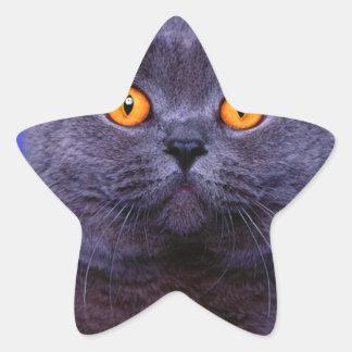 Gato negro gris impresionante pegatina en forma de estrella