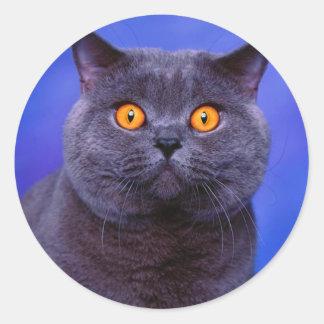 Gato negro gris impresionante pegatina redonda