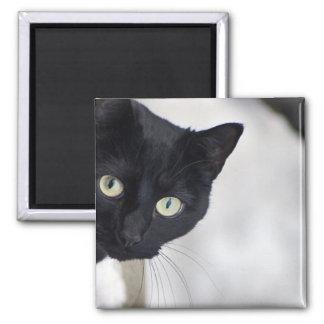 Gato negro imán para frigorifico