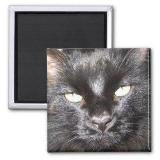 gato, negro imán cuadrado