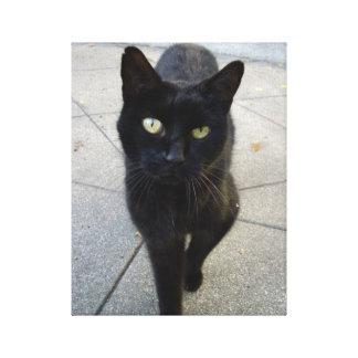 Gato negro lienzo envuelto para galerías