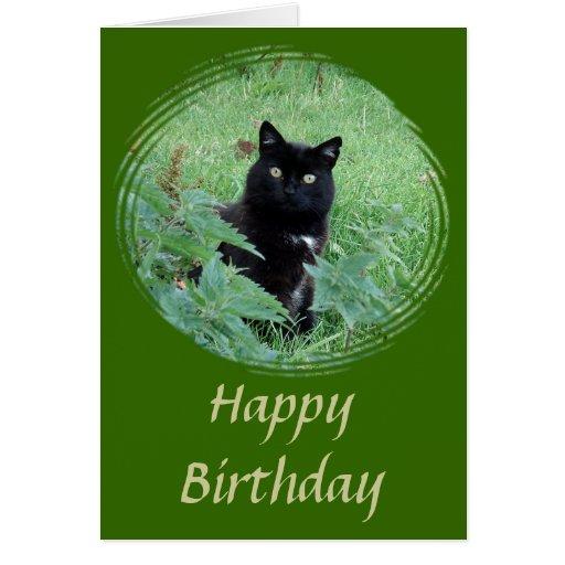 Gato negro lindo que mira la tarjeta de cumpleaños
