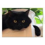 Gato negro observado grande lindo, notas en blanco felicitacion