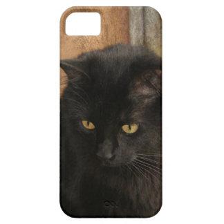 Gato negro, ojos del ámbar, tonos de la tierra tex iPhone 5 coberturas