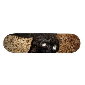 gato negro patín