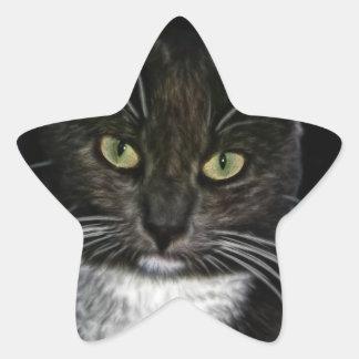 Gato negro colcomanias forma de estrellas