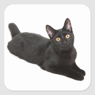 Gato negro pegatina cuadrada